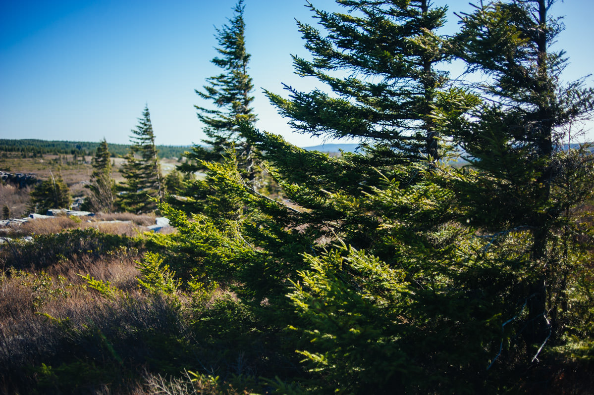 dolly sods wilderness west virginia nature photography by the oberports