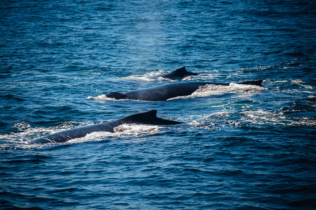 hyannis whale watching tour in september
