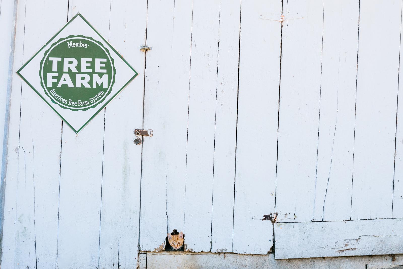 farm cat southern wv