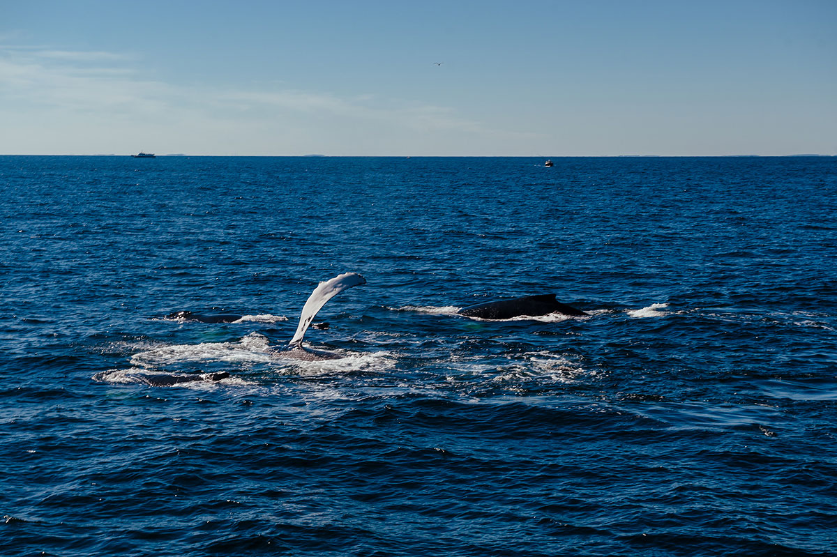 must see hyannis whale watching cruise in september
