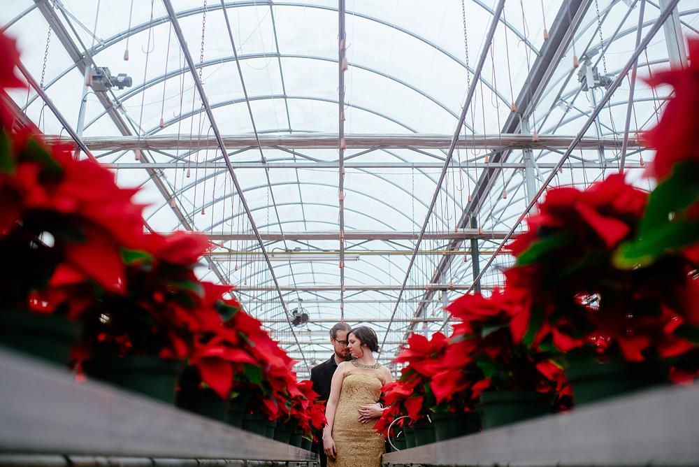 pointsettia christmas engagement greenhouse wv