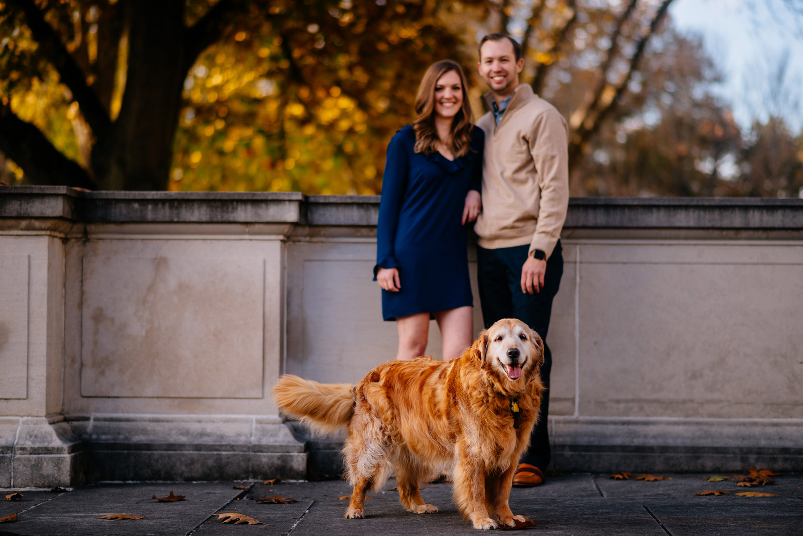 golden retriever engagement session