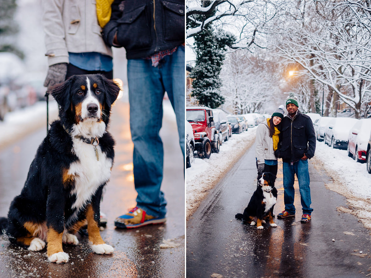 snowy urban engagement photos with dog bernese mountain dog