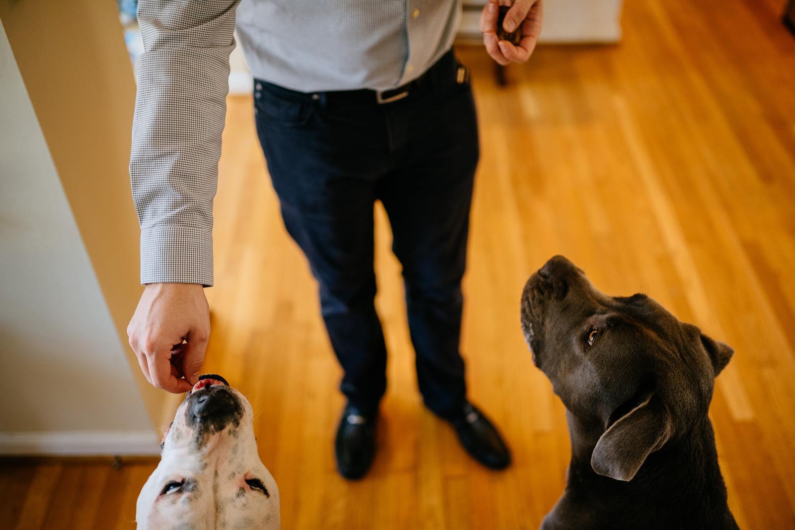 documentary family session feeding good dogs