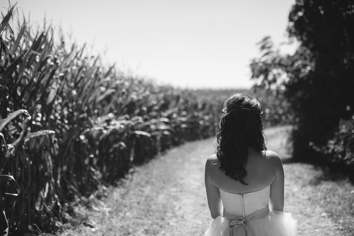 first look by cornfield