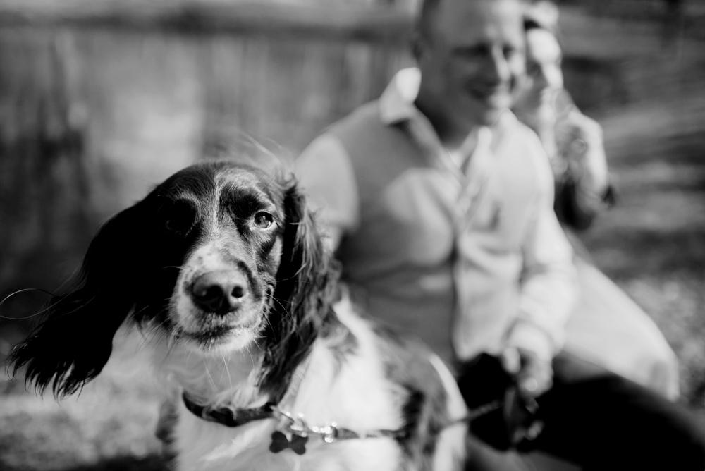 wedding day photos with dog