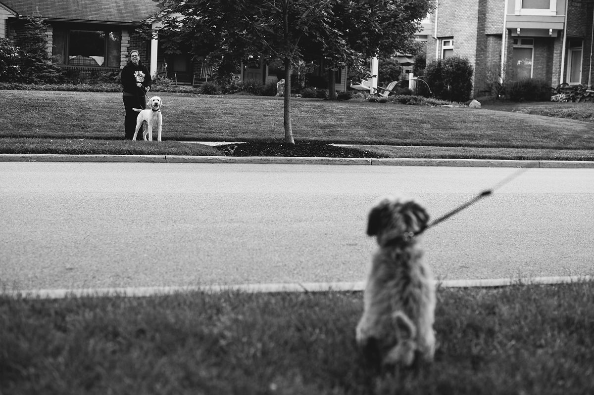 walking your puppy