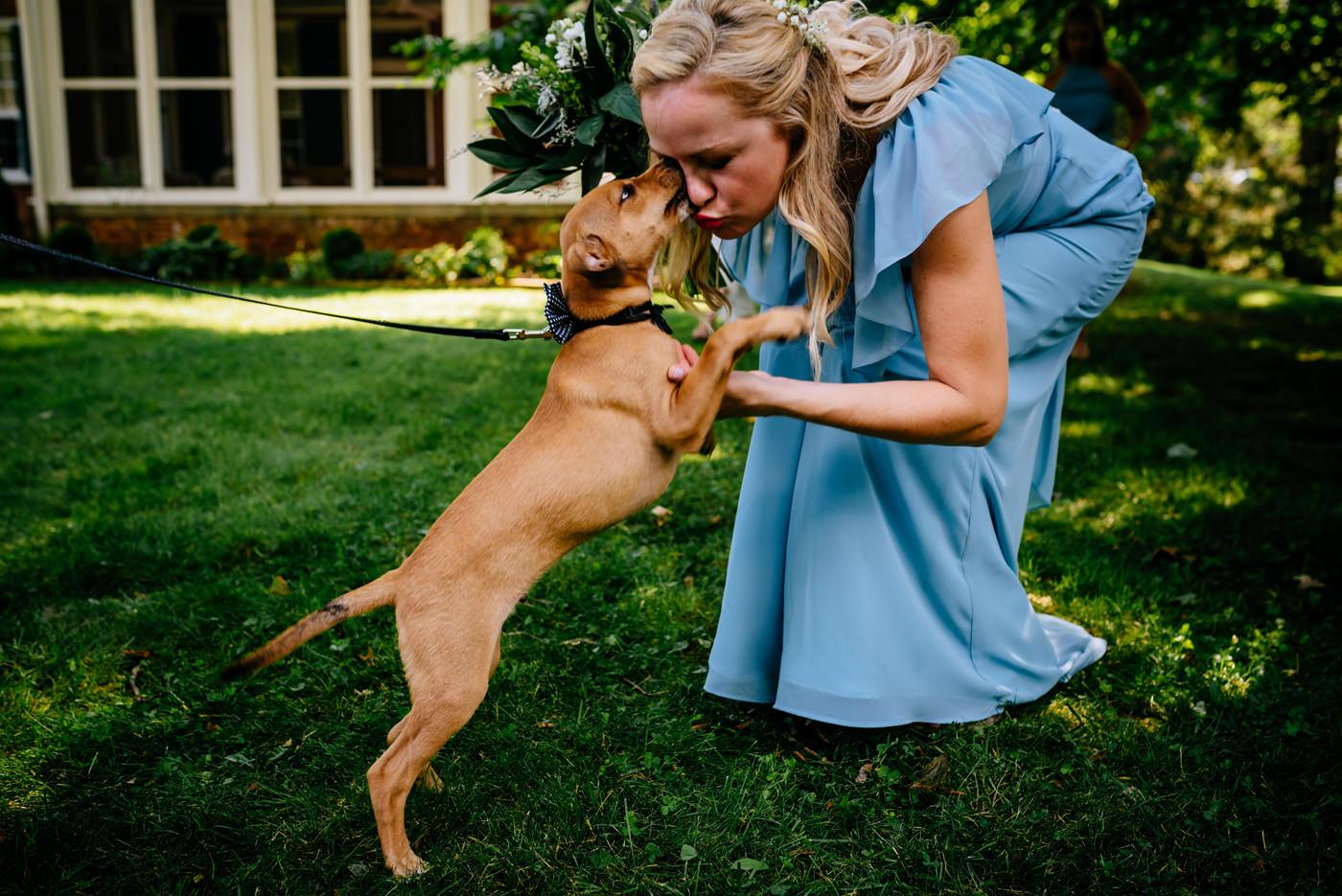 wedding ceremonies with puppies