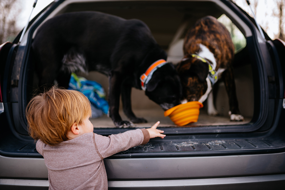 toddler with best friends dogs wv