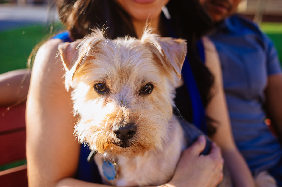 adorable dogs at engagement sessions