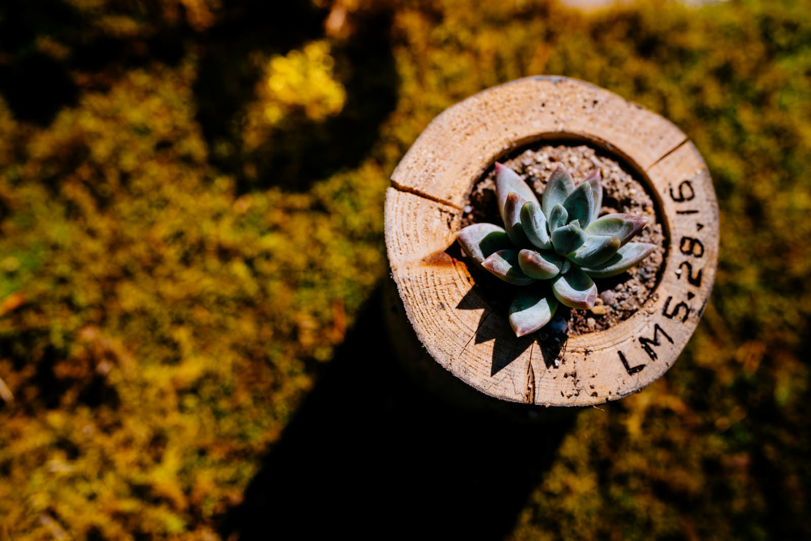 wedding details succulents wooden planters