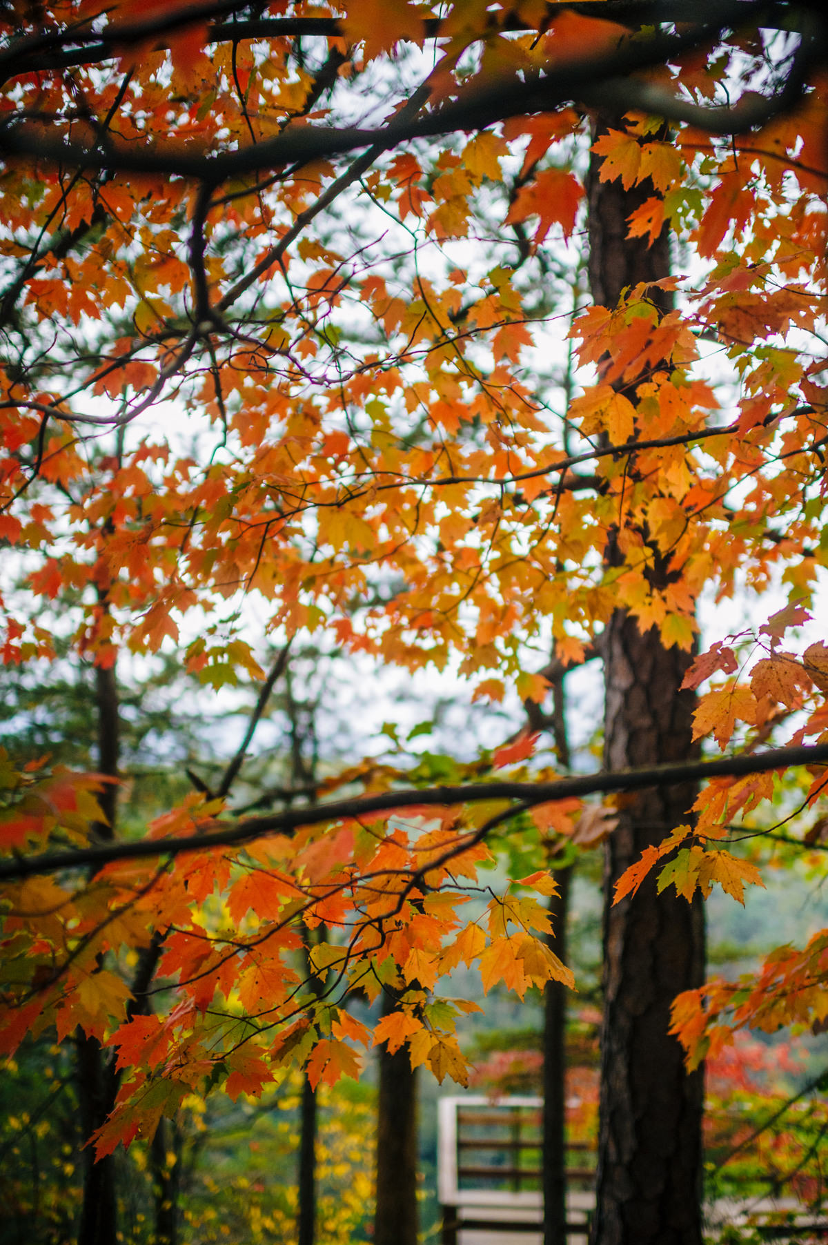 west virginia fall foliage fayetteville wedding