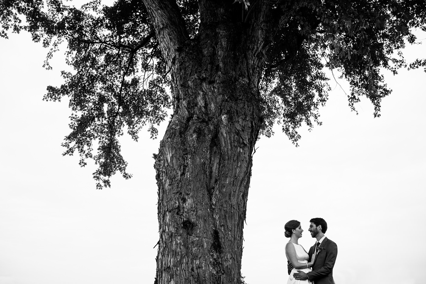 bride and groom artistic photo under a tree