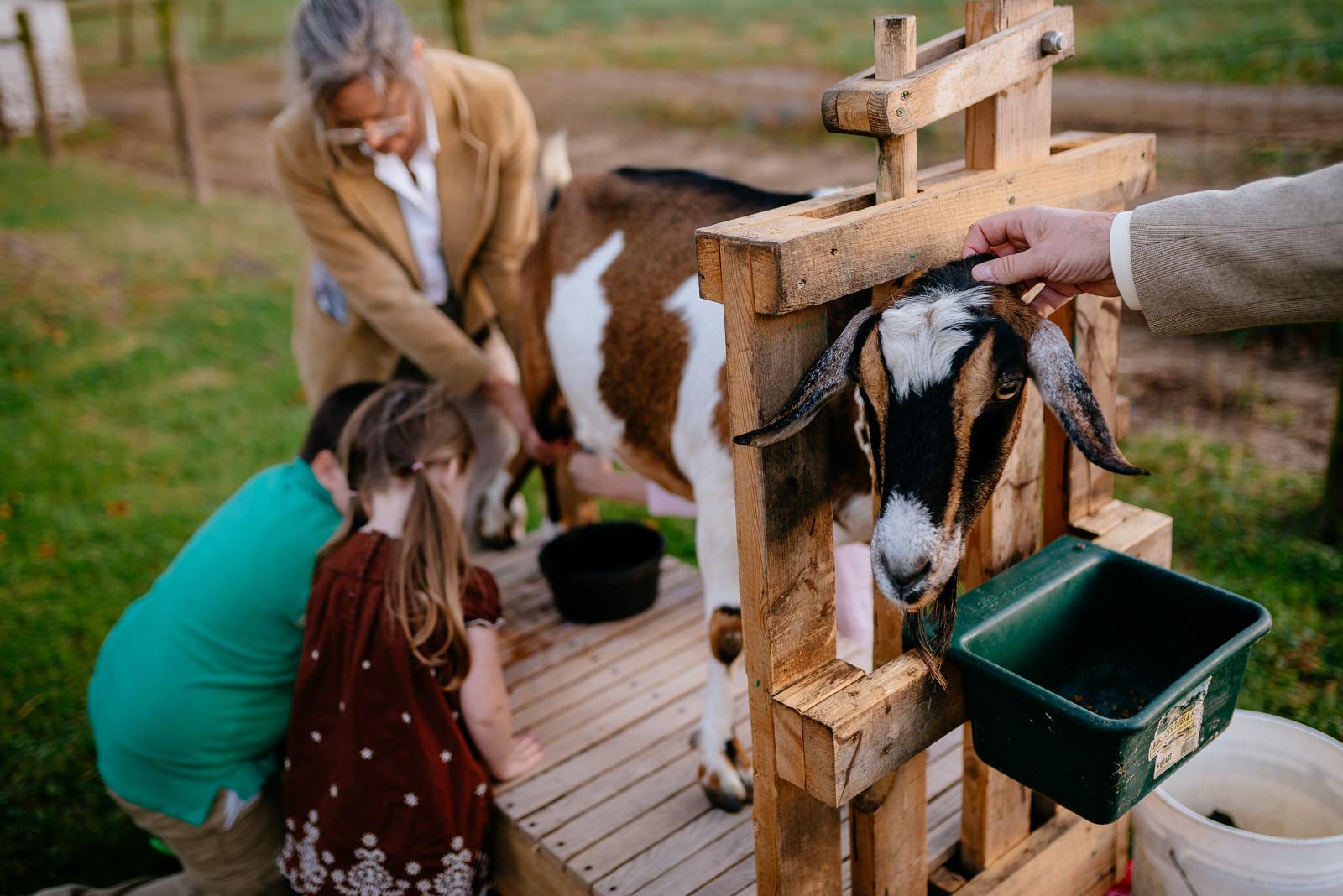 kids milking goat wv farm wedding