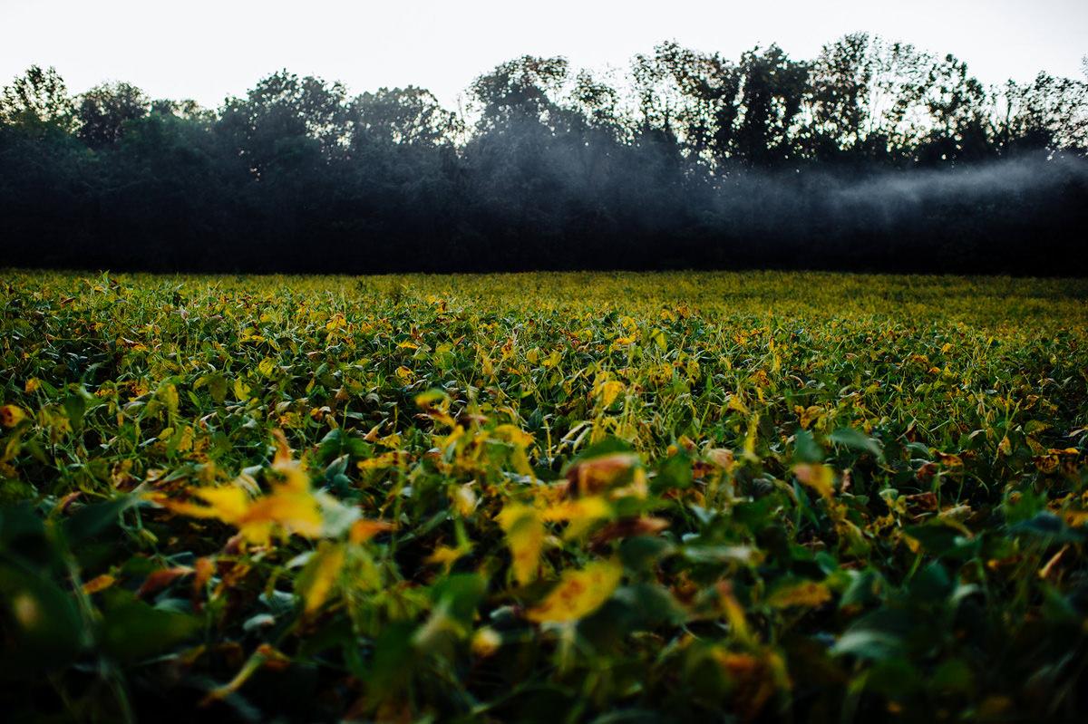 mist over ohio fields at sunset