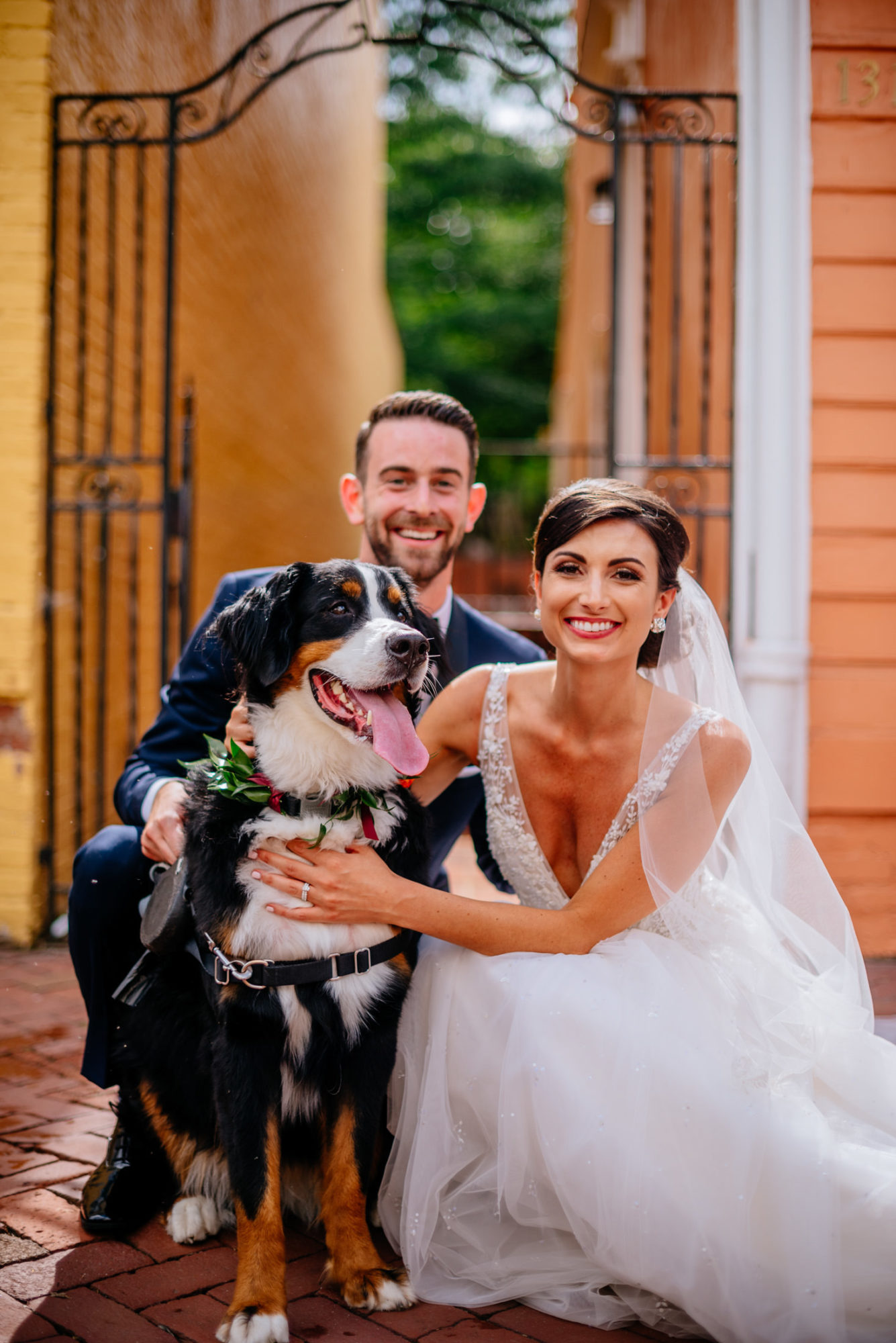 wedding couples with dogs