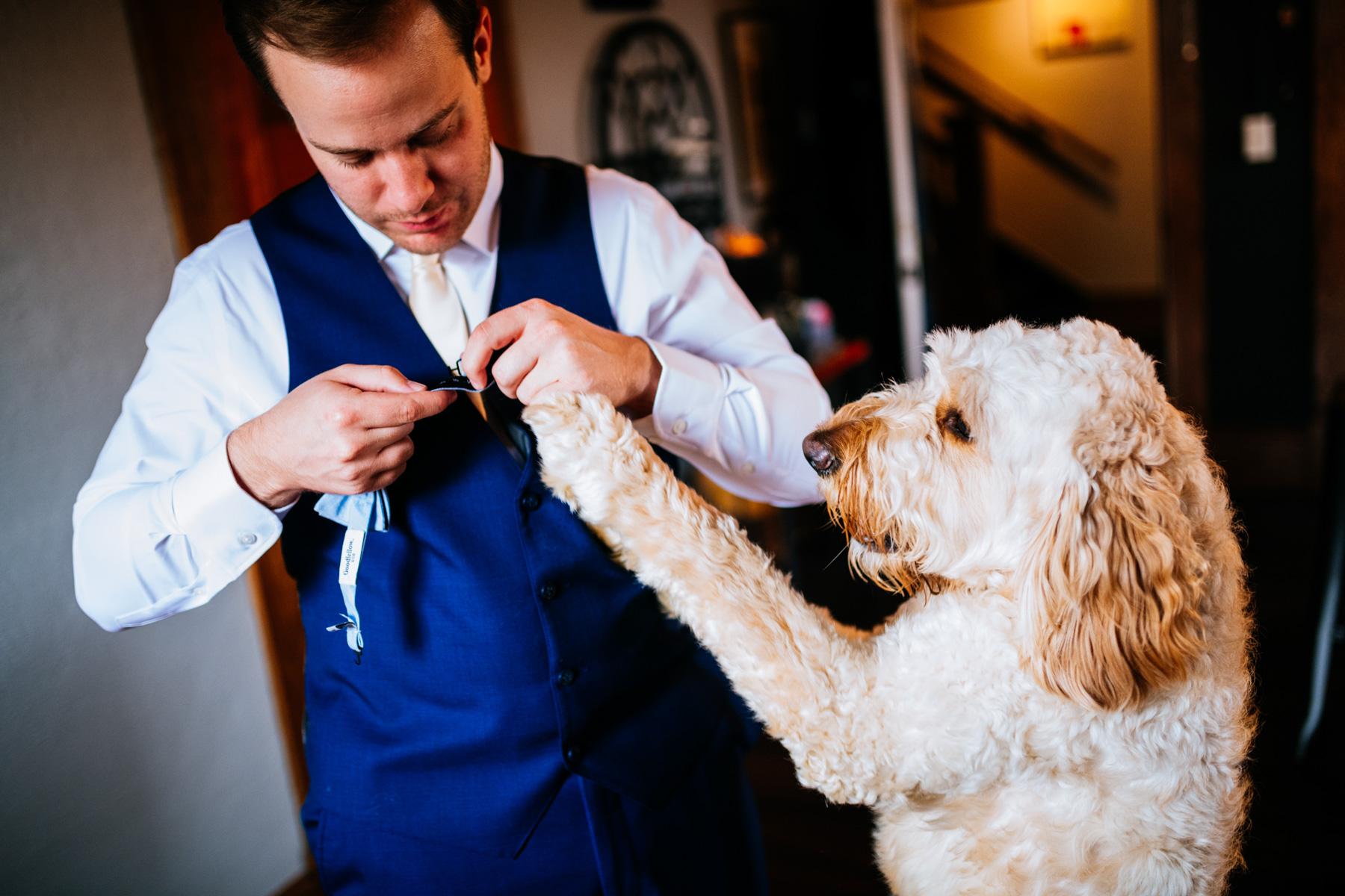dog putting on bowtie