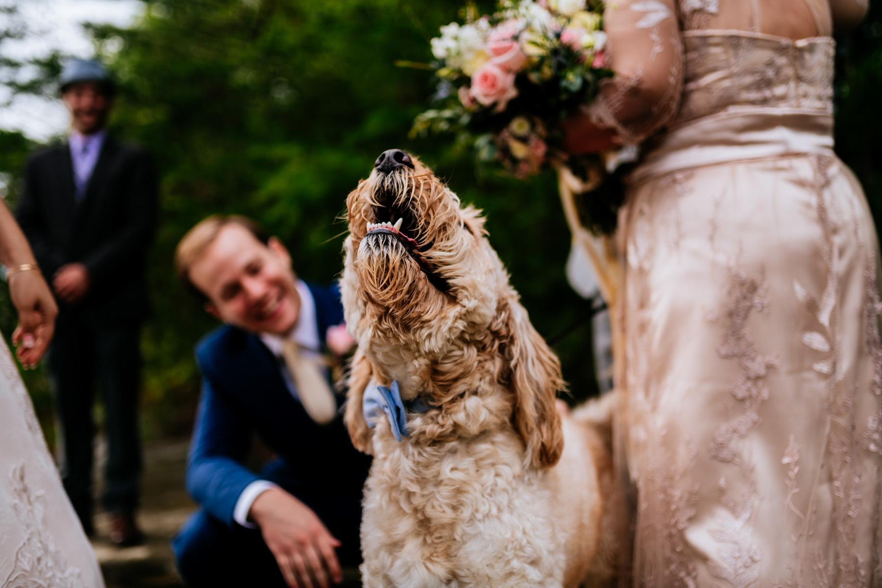 happy wedding dog