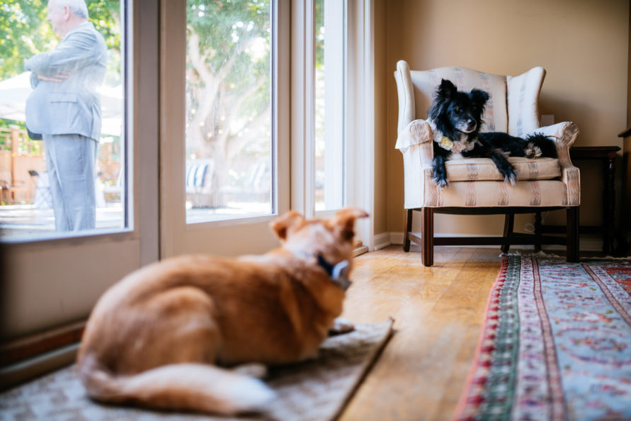 dogs in dining room