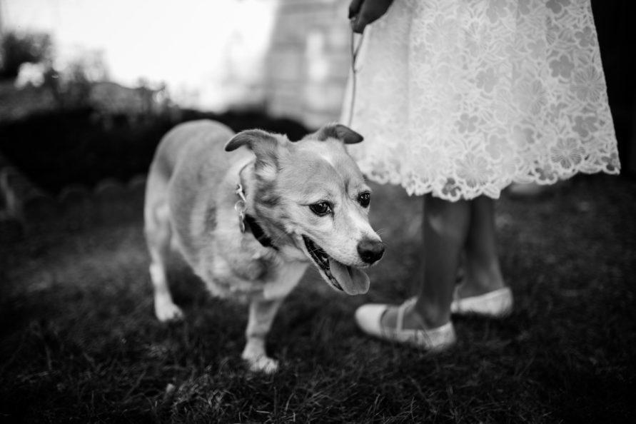 tripod dog at wedding