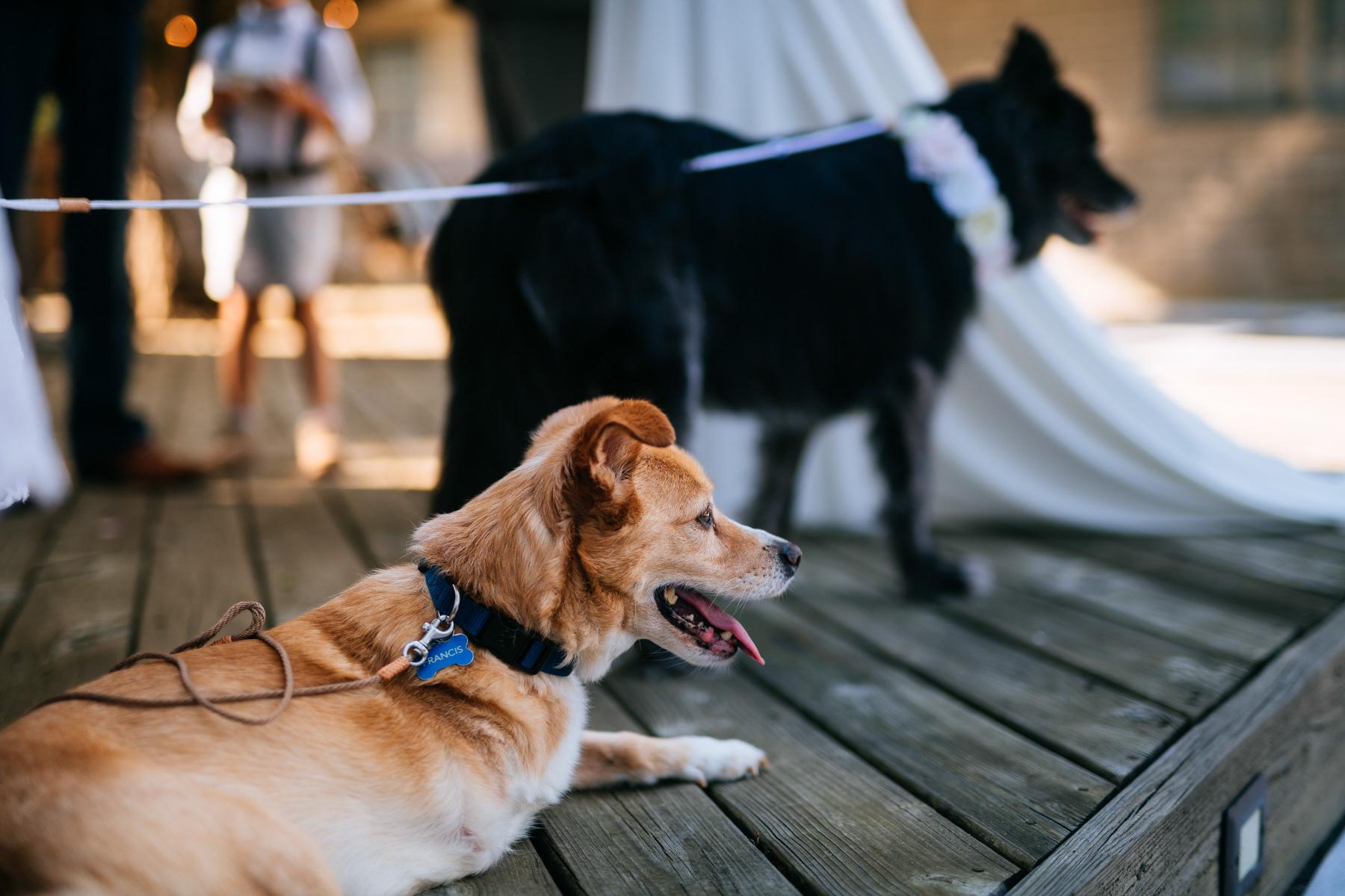 dog at wedding ceremony