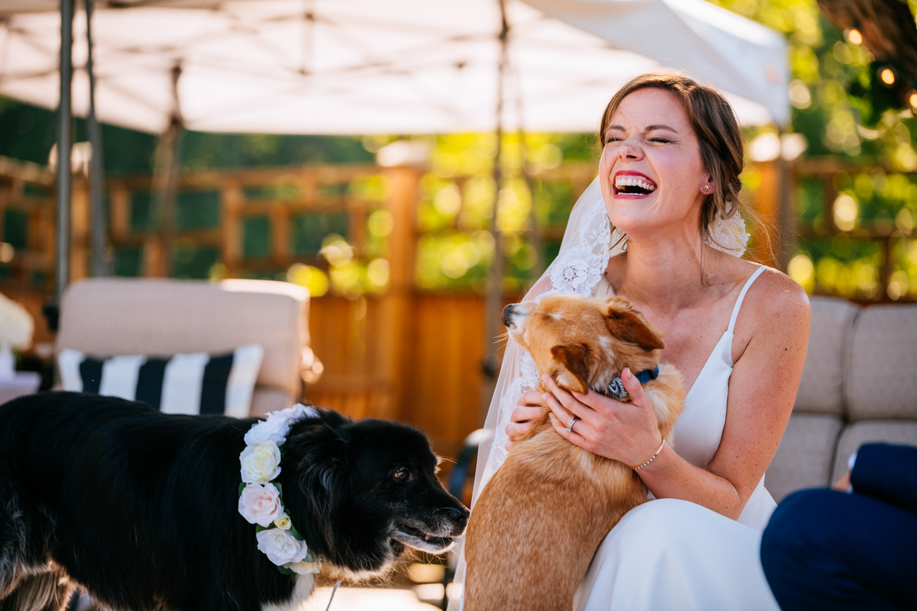 bride pets dogs