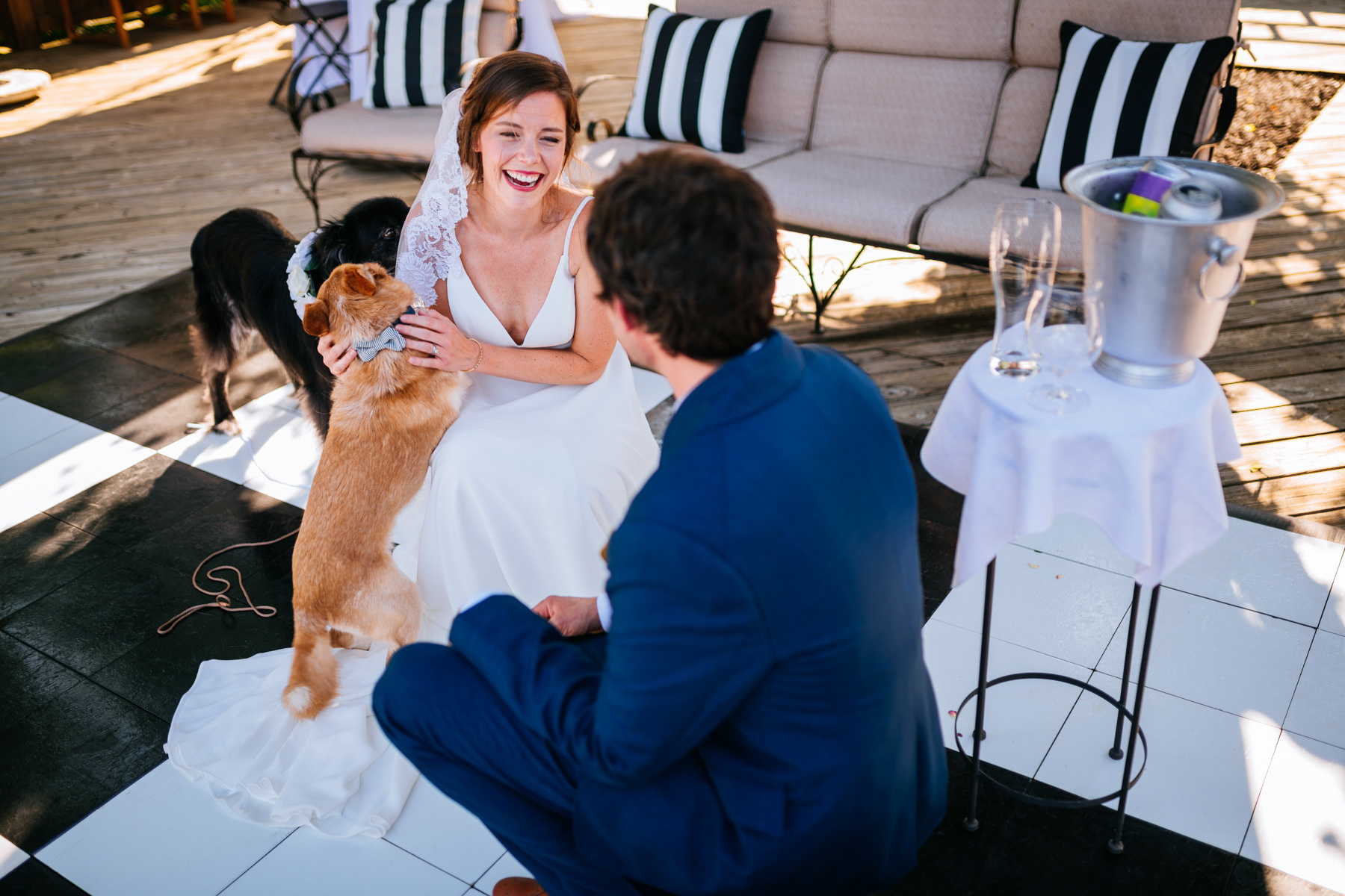 bride laughing with dogs