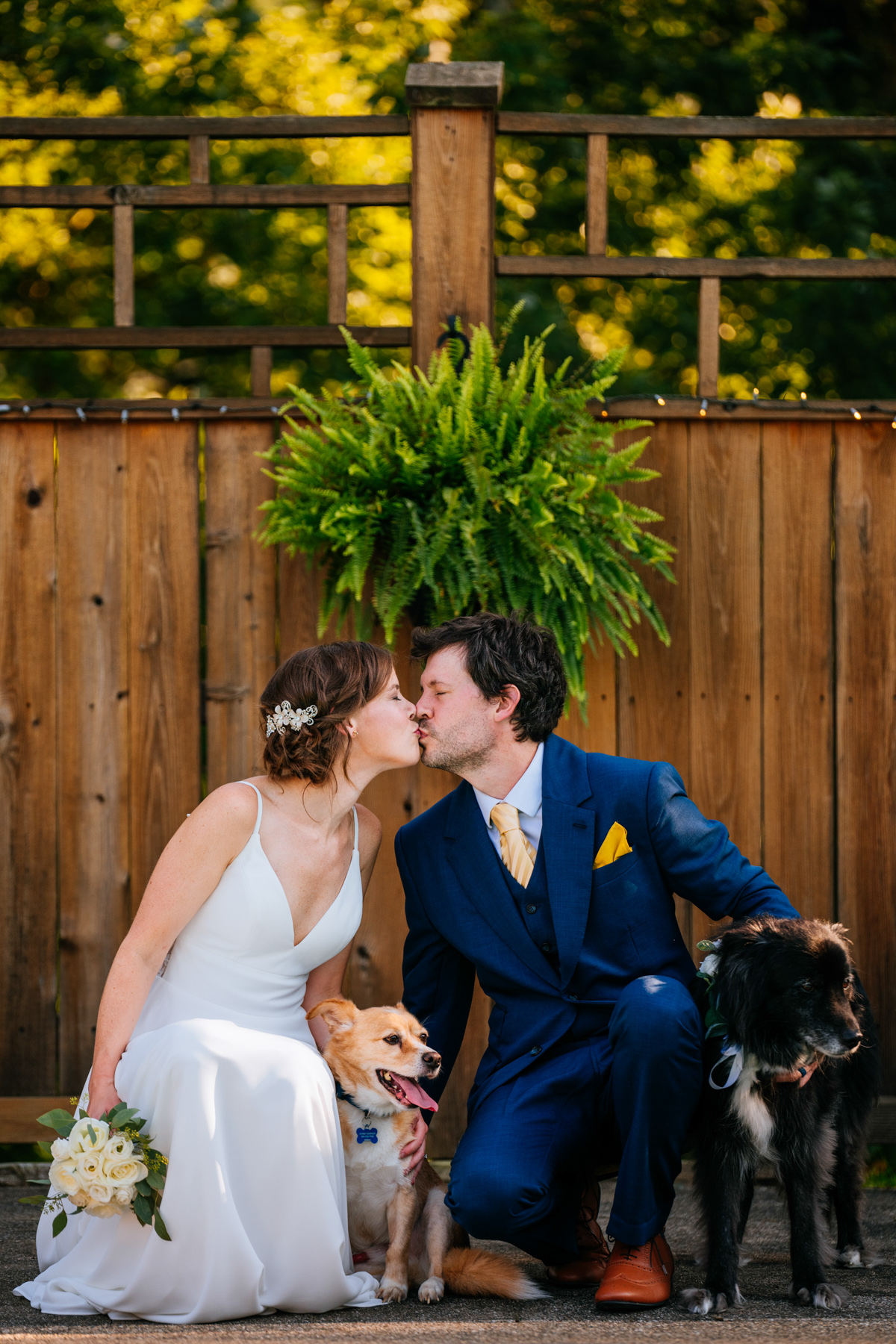 bride and groom kissing with dogs